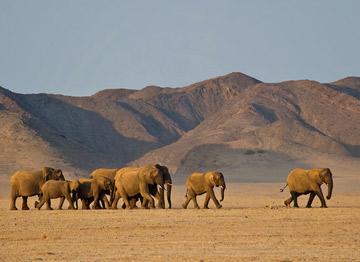 7 Days Namibia Highlights Tour