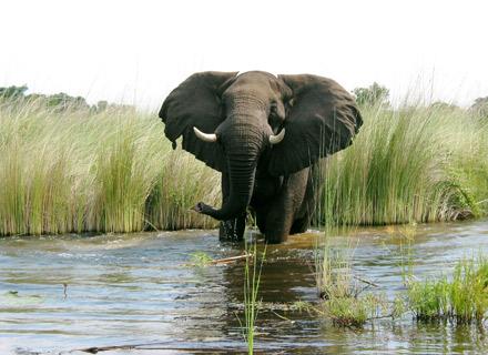 13 Day Unforgettable Botswana Tour