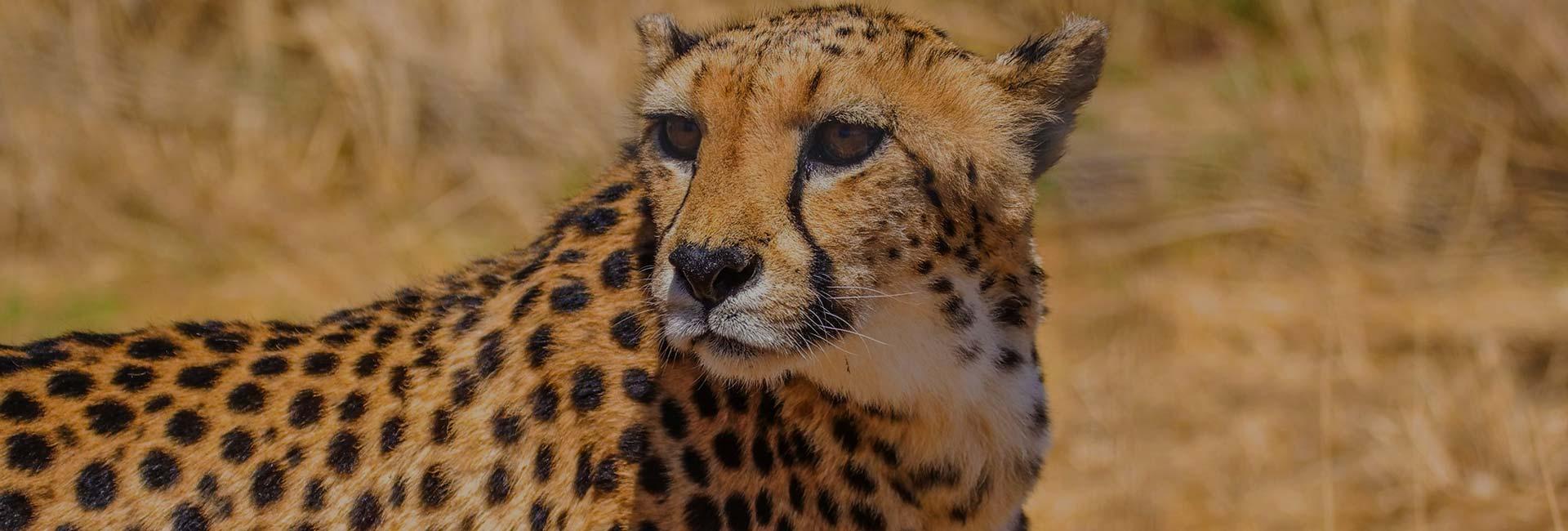 N/a'an Ku Se Wildlife Sanctuary
