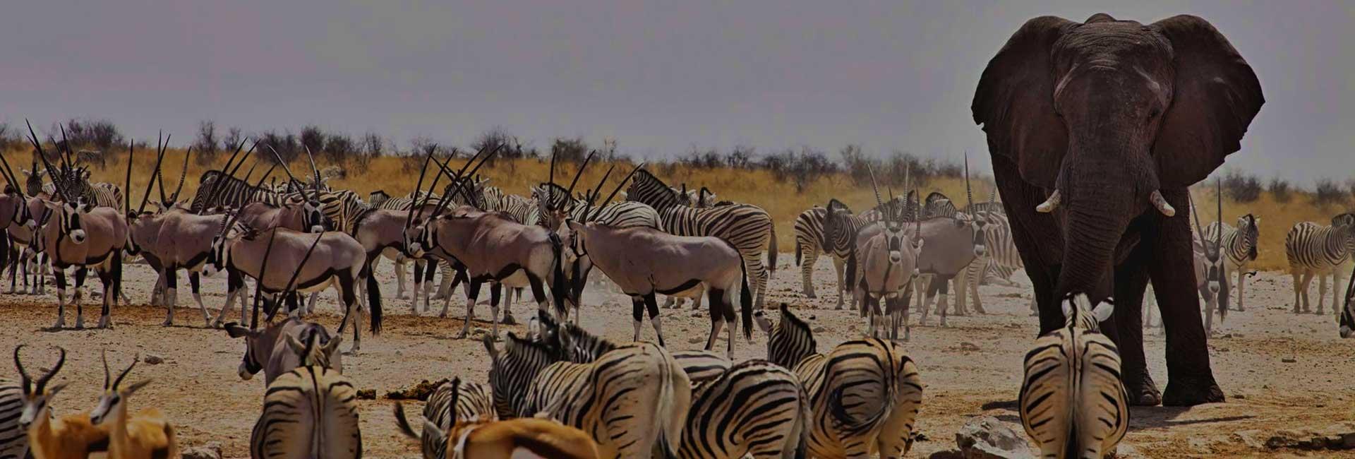 Namibia Accommodated Safari