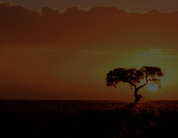 Talk To Our Safari Expert