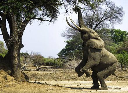 16 Days Namibia – Botswana – Victoria Fallstour